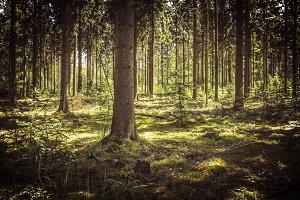 Deep Woods I