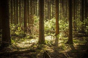 Deep Woods III