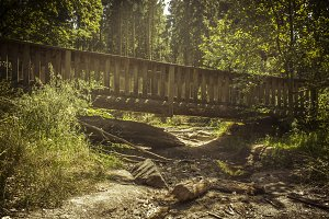 Wooden Bridge in Forest washed