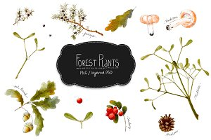 Forest Plants set