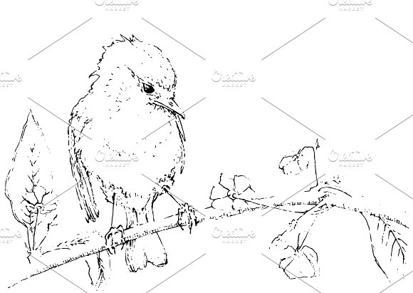 Watercolor bird sitting on a tree in Illustrations - product preview 2