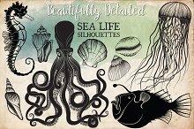 Hand Drawn Ocean Life Clipart