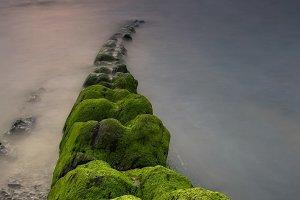 Green algae on the shore