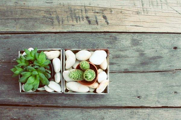 Mini plant pots on wooden table
