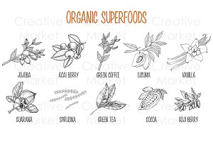 Superfood vintage hand drawn set