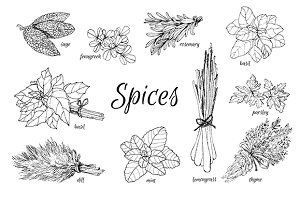 Hand drawn set of spice herbs