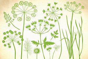 Herbs, dandelion, wild grasses