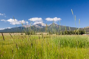 Grasses in front of Mount Princeton