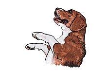 Beagle,begging for food