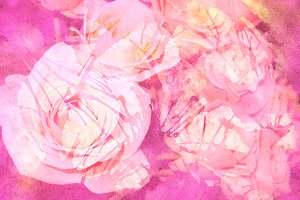 Watercolor pink rose background