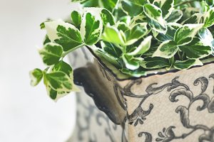 Green plant clippings in vase