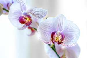 Elegant and Colorful Orchids.