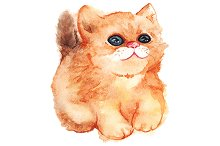 Watercolor ginger cat vector