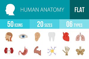 50 Human Anatomy Flat Colorful Icons