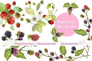 Berries watercolor Clip art