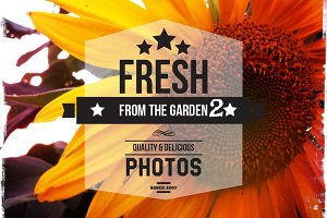 Fresh Photos from the Garden 2