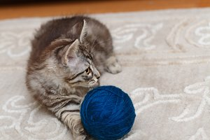 Kitten and ball of yarn.