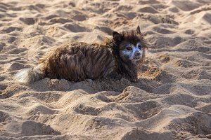 Bedraggled dog on beach