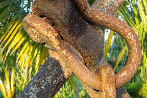 Large rusty chain links on anchor