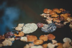autumn leaf on water