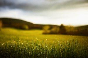Grass lit by the sun
