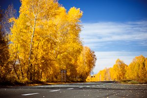 Road autumn, Golden trees