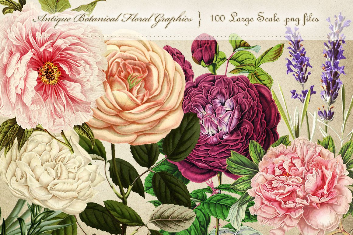 Antique Botanical Floral Graphics ~ Graphic Objects ...