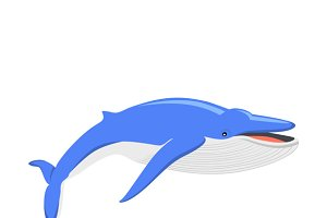 Blue Whale Isolated