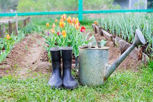 Rubber boots with watering can