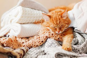 Cute ginger cat sleeps on clothes
