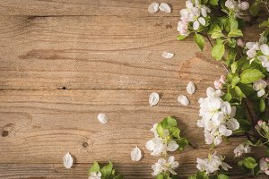 Wooden background and apple blossoms