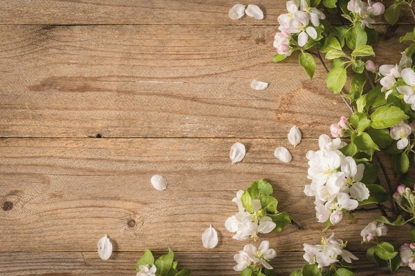 Wooden background and apple blossom…