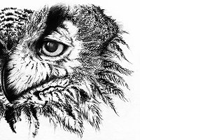 Monochrome owl line art sketch