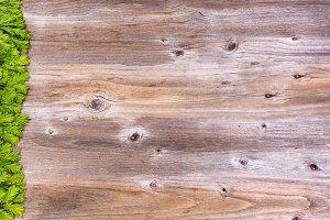 New Fir Branch Tips on Wood