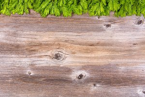New Fir Tips for Xmas Border on Wood