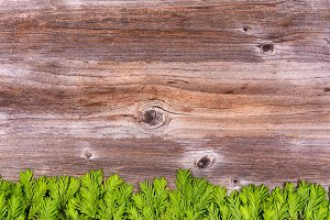 New Fir Branch Tips on Aged Wood