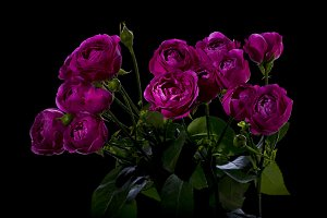 Bouquet of roses Peony
