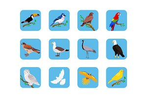 Various Birds Flat Design