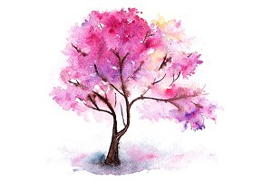 Watercolor single cherry sakura tree