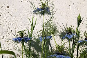 flowers blue spiders and shadow