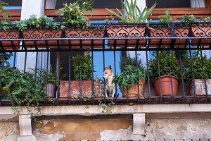 Terrier on Terrace