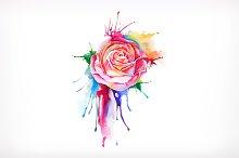Watercolor painting, rose flower