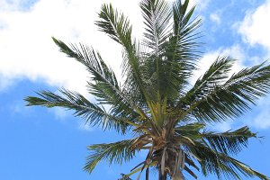 Africa Palm Trees