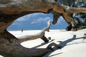 Landscape Of Diani Beach