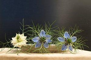 blue flowers piders in row