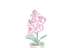 Pink orchid flowers in sketch style