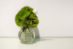 Green plant wiht a flower in glass