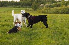 Three dogs on a walk