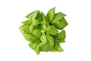 Juicy, fragrant green basil herb