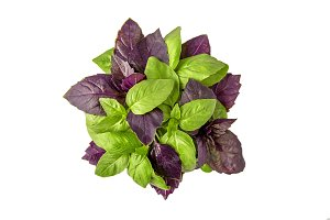 Green and Red Basil Herb